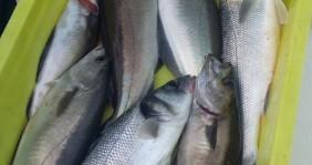 Bénéteau Antares 620 Fishing entre particuliers et professionnel à Loctudy