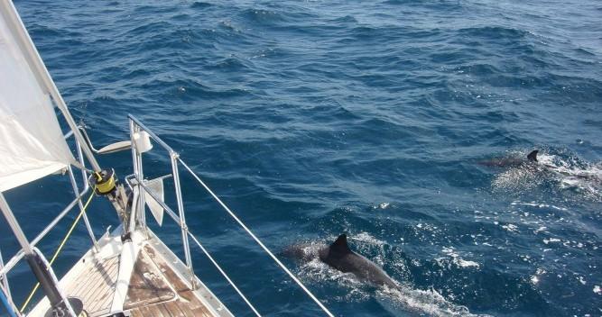 Location bateau Bénéteau Oceanis 343 DL à Arradon sur Samboat