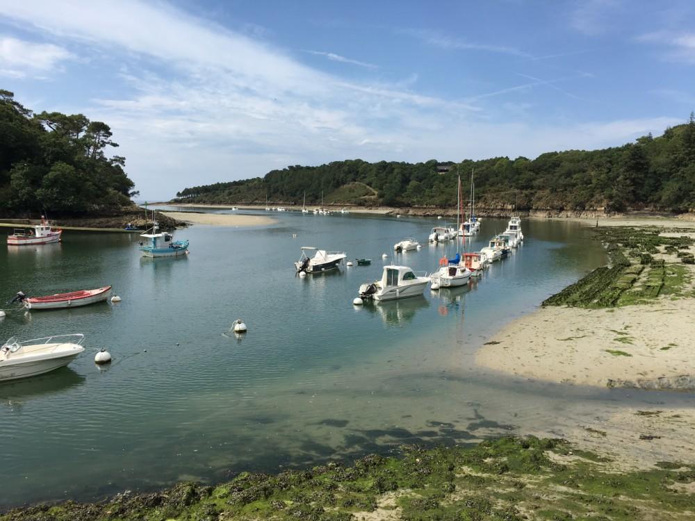 Rental Motor boat in Port-la-Forêt - Quicksilver Quicksilver 805 Sundeck