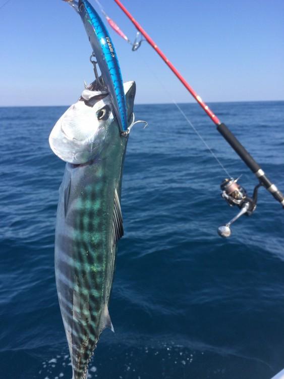 Louez un Sortie pêche  Bluefin2 à Leucate