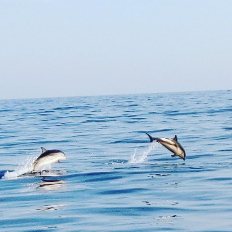 Bayliner 6m entre particuliers et professionnel à Puerto Deportivo de Marbella