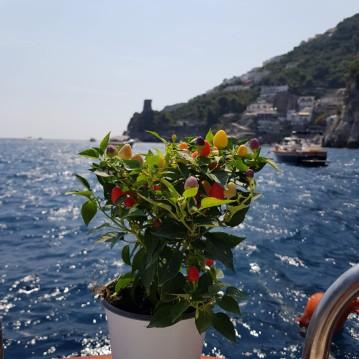 Location yacht à Positano - Aprea Mare 30 sur SamBoat