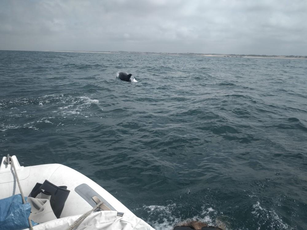 Location bateau Bwa FIVE TEN à Capbreton sur Samboat