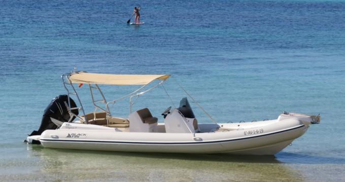 Location Semi-rigide à Ibiza (Ville) - Black Fin Blackfin 8 Elegance