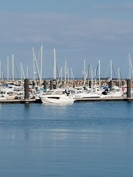 Location bateau Quicksilver Activ 755 Weekend à Roscoff sur Samboat