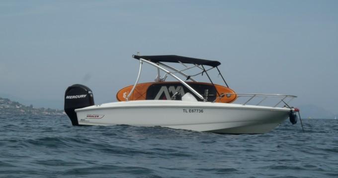 Louer Bateau à moteur avec ou sans skipper Boston Whaler à Les Issambres